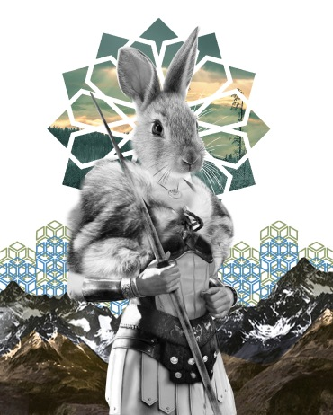 Quiet Rabbit Warrior